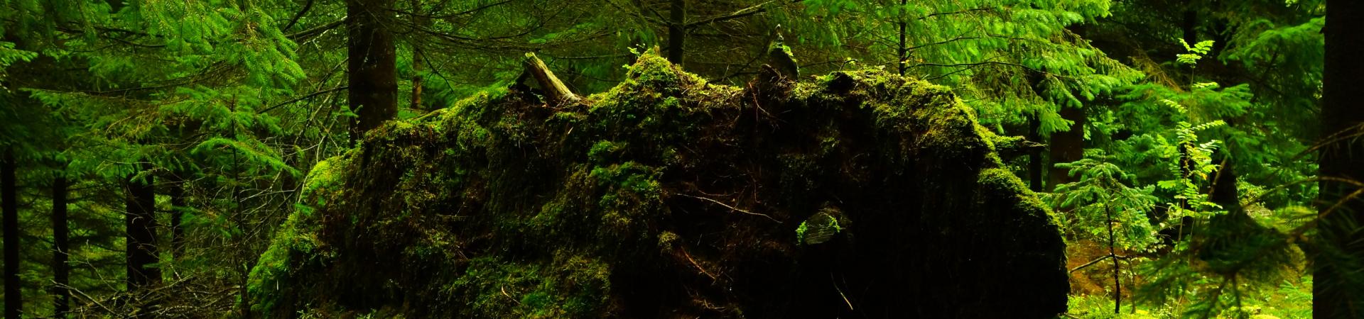 fallen-tree-1920×450